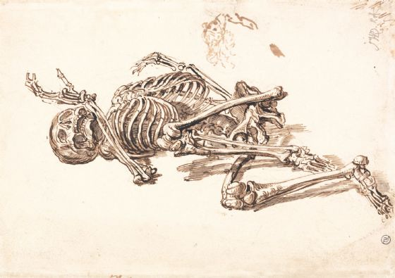 Ward, James: A Human Skeleton. Fine Art Print/Poster (5038)
